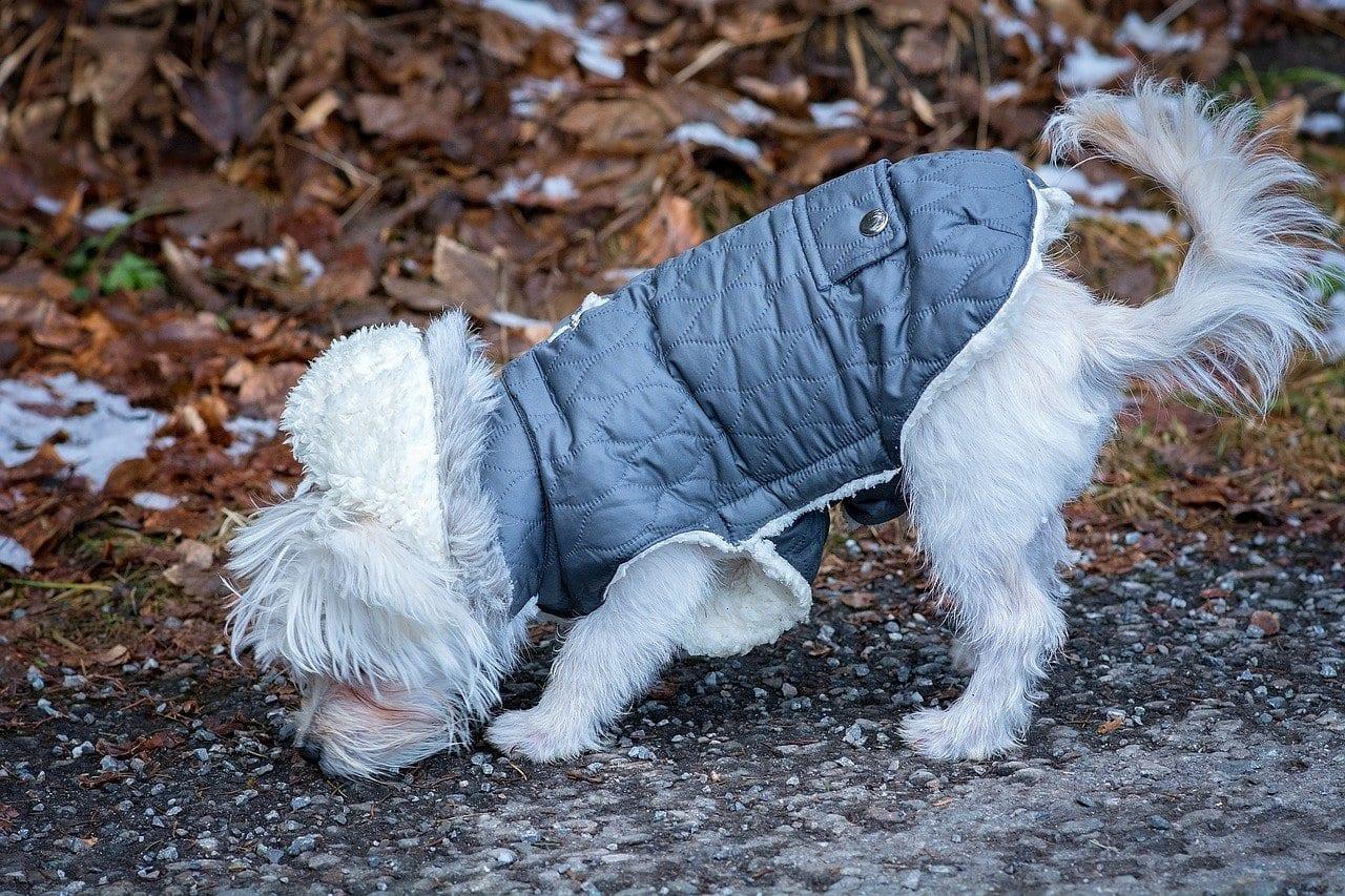 cachorro no inverno