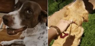 cachorros na justica maus tratos